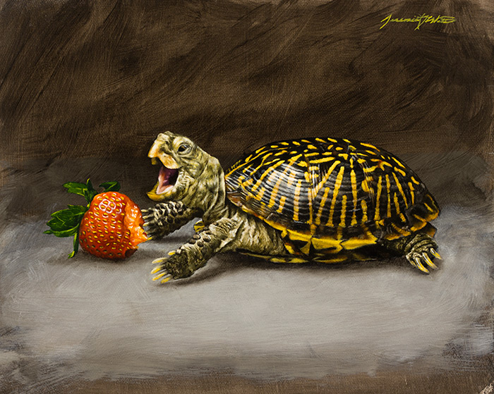 A still life painting of a box turtle eating a strawberry.