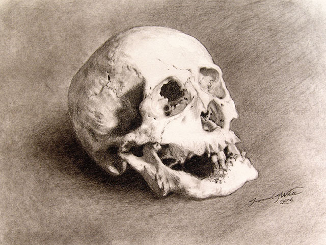 A charcoal study drawing of a skull of an elderly person. The skull includes the mandible and one tooth.